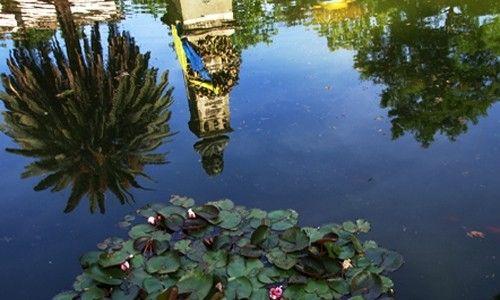 'El tesoro del agua'. real jardín botánico, Madrid