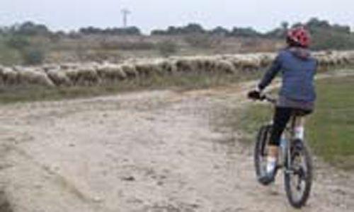 Recorridos en bicicleta por la historia de Madrid: reales sitios en la ciudad de Madrid. la casa encendida, Madrid