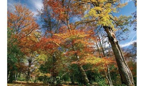 '100 bosques de la península ibérica'. casa de las ciencias, Logroño