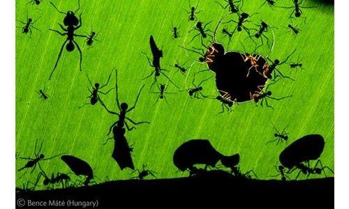'Fotógrafos da natureza. wildlife photographer of the year 2011'. centro social novacaixagalicia de santiago de compostela