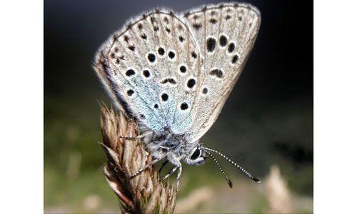 'Los secretos de las mariposas'. casa de las ciencias, Logroño