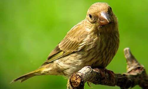 Día mundial de las aves 2011