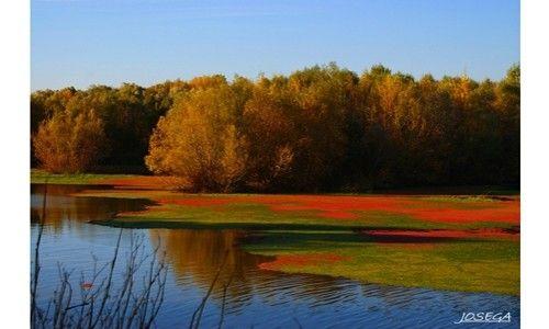 'Bosques de la rioja'. casa de las ciencias, Logroño