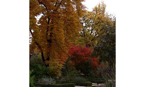Visitas temáticas. real jardín botánico, Madrid