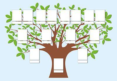 Qu es un rbol geneal gico for Nombres de arboles en ingles