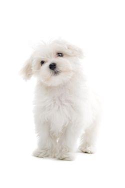 experto hembra estilo perrito en Marbella