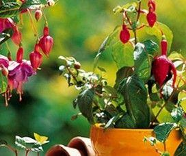 Consejos para cuidar de tus plantas en verano - Como cuidar las plantas de exterior ...