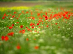 Síntomas y tratamiento de la alergia al polen