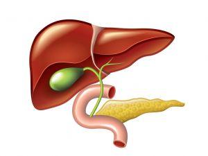 ¿Por qué se produce la cirrosis hepática?
