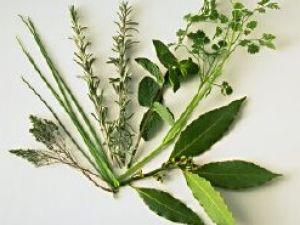 Remedios de homeopatía para los trastornos renales