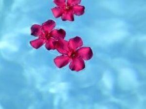 Una flor para cada problema