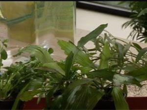Cómo plantar flora acuática