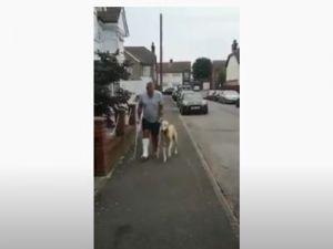 Vídeo viral: el perro 'cojo' que se solidarizó con su amo