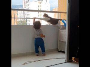 El vídeo viral del gato protector
