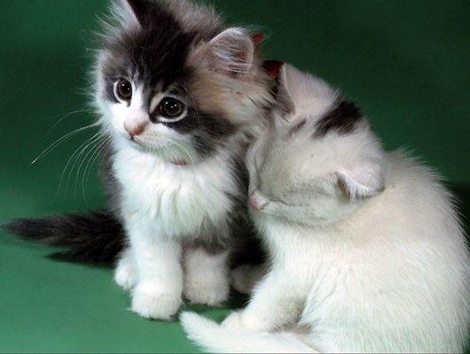 Gatitos suaves