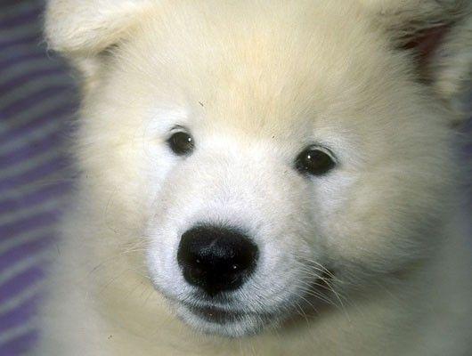 Perro suave