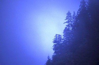 Bosque en ladera
