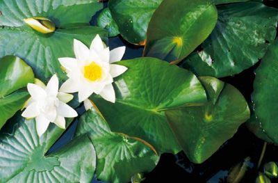Margarita y hojas