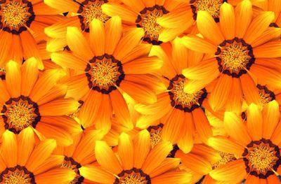 Margaritas amarillas