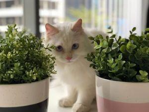 Trucos de la abuela para que tu gato no se coma las plantas
