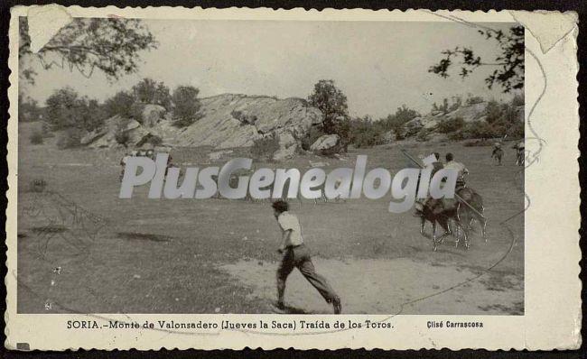 Traída de los toros en el monte de valonsadoro (jueves de saca) de soria