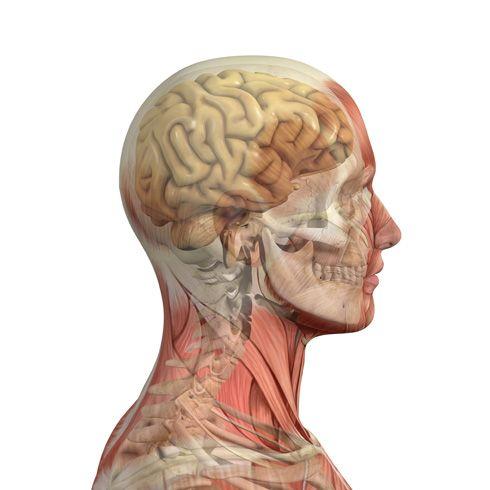 Cráneo 3D