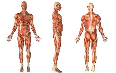 Direcciones del cuerpo