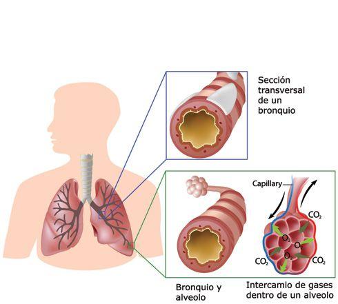 Topografía de los pulmones