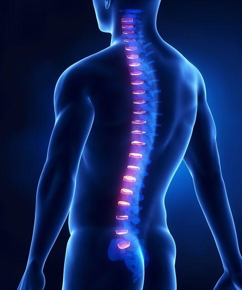 Tórax y brazo (discos invertebrales)