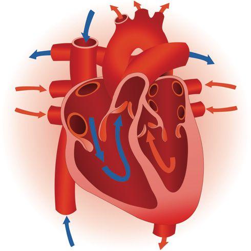 Canal arterial