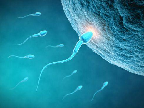 Acercamiento de espermatozoides