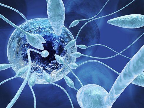 Espermatozoide y óvulo