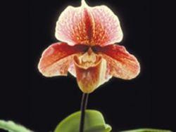 Orquídeas. Un amor duradero