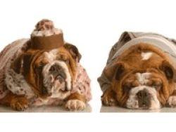Animales de compañía: una opción llena de responsabilidades