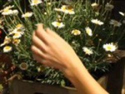 Cómo transportar plantas