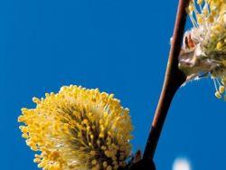 ¿Qué son las Terapias Florales?