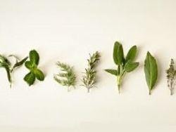 Una planta para cada enfermedad