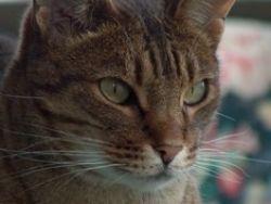 Ocycat