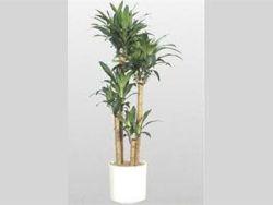 Cómo mantener una planta en una maceta