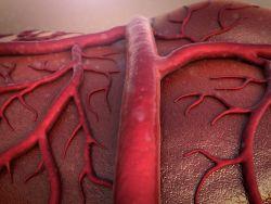 Arteria de la temporal, arteritis de células gigantes y polimialgia reumática