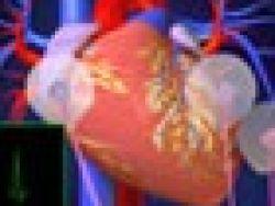 ¿Cómo funciona el sistema de coducción del corazón?