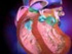 Cómo funciona el corazón