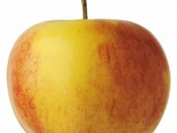 Zumo de manzana con especias