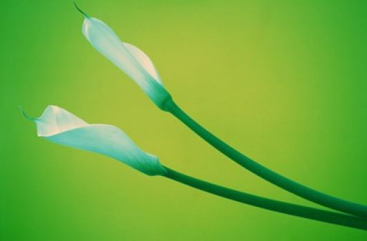 Flor azulada verde
