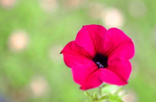 Flor pétalos rosas