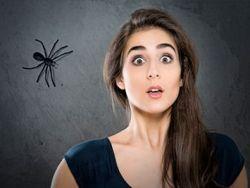 6 trucos de la abuela para acabar con las arañas