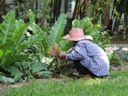 5 trucos de jardinería que posiblemente desconocías