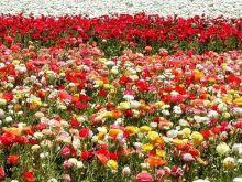 Con flores a María...
