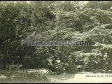 Glorieta de los cedros (ávila)