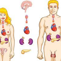 Glándulas endocrinas